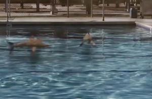 鲨卷风:游泳池惊现大量鲨鱼,男子往里面倒燃料放火烧鱼