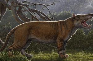 重达两吨并以大象为食:科学家们发现了史上最大体积的猫