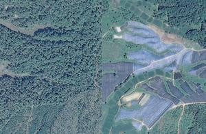 卫星图曝光黑龙江6000亩林地疑被毁林种人参 深色塑料布覆盖山林