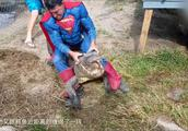 美国男子扮成超人跳入鳄鱼池与鳄鱼搏斗,只为让朋友偷几个鳄鱼蛋