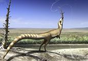 中国1.3亿年前的恐龙,羽毛颜色和小浣熊一样,还有一副黑眼圈