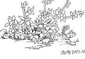706草丛豆蔓 钢笔画零基础入门学习视频三分钟教程