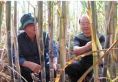 云南甘蔗主产区优势气候条件