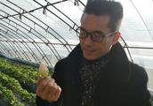 北京冬季最暖心的草莓熟啦――万博地生态农业基地绿色食品结硕果