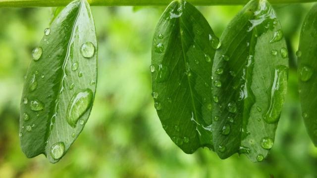 小学关于雨的古诗