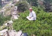 安徽九华山一高僧在松树顶上盘腿打坐引热议