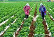 怎么辨别农药已经变质过期?