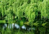 李说一出联之描写春日江边杨柳依依,轻拂水面的上联:垂杨拂碧水