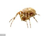 蜘蛛进化了,中国首列发现会哺乳行为,为祖国点赞