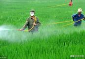 农作物病虫害为什么越来越严重?值得我们深度思考的文章