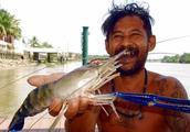 湄公河多到泛滥的大虾,犹如进入养殖场,随便都能钓到1斤重的虾
