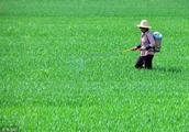 5000种农药用量过多的后果是怎样,专家为你解答你的疑问