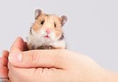 大金鼠,3月下旬特别重要,有一生中最大的