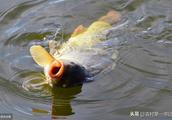 鱼死了,是中毒了还是泛塘了?农村第一书记教你5种区分法