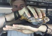 这是世界上最大的蜗牛,一个蜗牛能炒一盘子