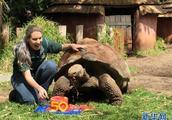 """澳大利亚珀斯动物园为加拉帕戈斯象龟""""塞罗""""庆生"""