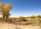 消失的首个沙漠:几百万亩沙漠80%变成绿洲,这种食物在这里存活