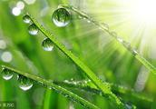 风清:晨曦的汗水 潮湿了叶脉的胸口