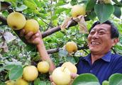 梨树得了梨锈病,不仅会影响美观还会减少产量,该怎么预防呢?