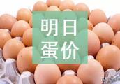 明日(2月21日)鸡蛋价格预测