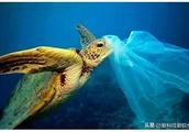 鱿鱼蛋白或可代替塑料,鱿鱼:吃我不够还要用我装东西?