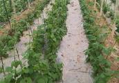北方冬季种植什么经济作物