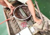 农村男子用最懒的方法钓鱼,超级简单