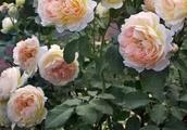 岁月美如花,花花花太美了,愿好运相伴,收获幸福,收获财富!