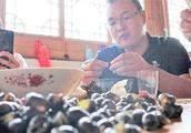 鑫嫂今天炒的河螺很好吃,每个人都吃到停不下来