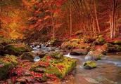 森林旅游开发模式