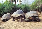我国陆龟产业现状及发展趋势