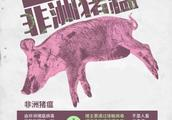 运猪车取消高速免费、全面禁喂泔水,国务院防控非洲猪瘟出大招