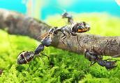 家里有蚂蚁怎么办?在角落放点韭菜,家里的蚂蚁全没了