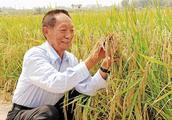 89岁袁隆平再创奇迹,湘两优900(超优千号)亩产达1203.36公斤