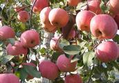 原来腐烂的苹果还有大用途,学会帮我们省下不少钱!