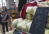 山西小伙卖大白菜一斤才三毛钱 便宜卖掉还赚近千元 办法真好