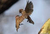 展开双翼的鸟都很漂亮