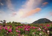 凝香集萃 四季皆美!济南莱芜香山 鲁中山区的璀璨明珠!