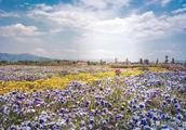为什么说春季无论是前往大理古城或是登苍山游洱海都再适合不过了