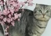 萌宠芬迪:朕可是为家里的花花草草操碎了心的!