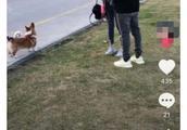 今日王思聪和女友穿情侣鞋出门遛狗,陈雅婷素颜清纯