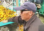 农村老人卖水果,大概能赚多少钱?听听老人怎么说