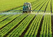 肥价连创新高,这些肥企为何仍会破产?