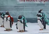 关注|趵突泉里养海豹,让企鹅背书包,这样好吗?