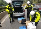 网上逃犯使用套牌车上路 又被交警查出车内藏毒