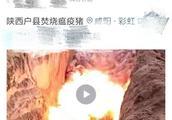 """网警辟谣丨网传""""焚烧猪瘟疫猪""""的视频系虚假信息"""