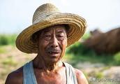 农民苦不堪言,种出来的菜只能卖到7分钱一斤,每亩还要倒贴1000