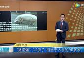 建川博物馆的贵客:12岁的猪坚强多老了?相当于人类的100岁!