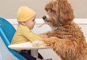 狗狗与孩子在一起好暖心的画面