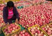 种了那么多苹果,你咋还是那么穷?到底是哪里出了问题?答案扎心